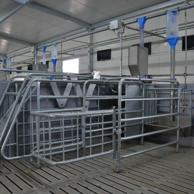 Kojec samoblokujacy system grupowego żywienia loch 640x640 - Sow gestation sector