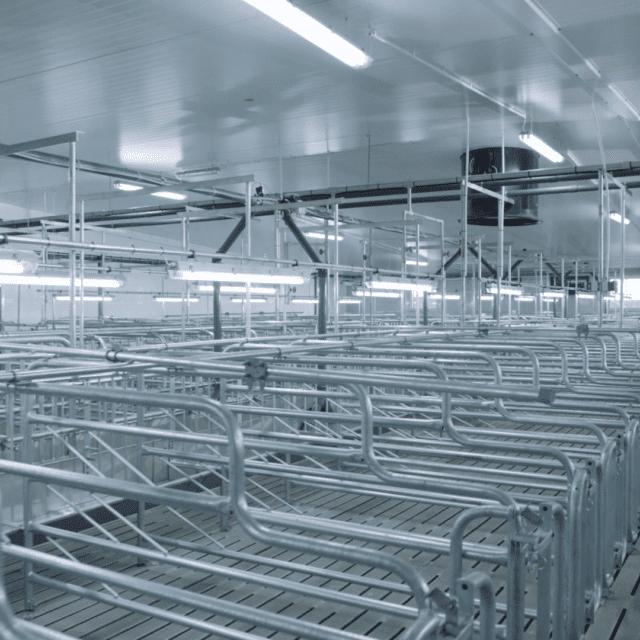 Sektor krycia z żywieniem na mokro 640x640 - Insemination sector - wet feeding