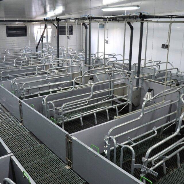 Sektor porodowy żywienie mokre 1 640x640 - Farrowing sector - wet feeding
