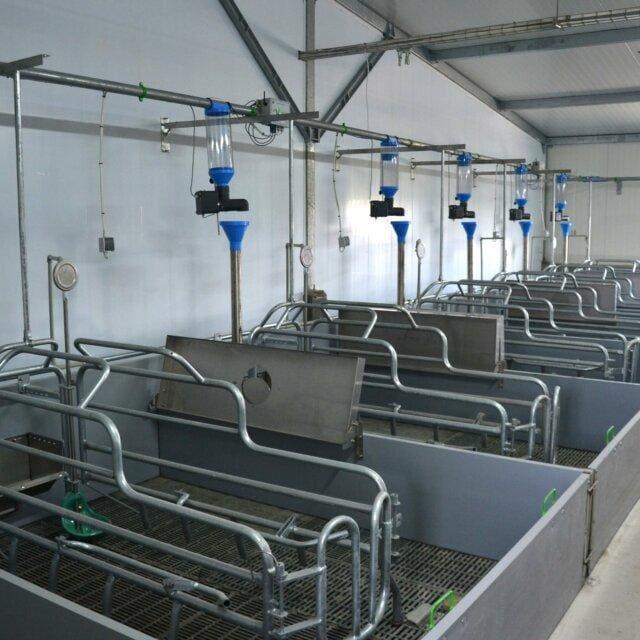Sektor porodowy z automatycznym żywieniem 640x640 - Farrowing sector -  individual feeding schedule